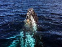 Yamba Whale Watching